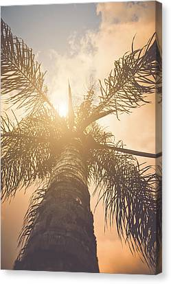 Tropical Beach Canvas Print - Palm Trees With Instagram Style Retro Filter by Brandon Bourdages