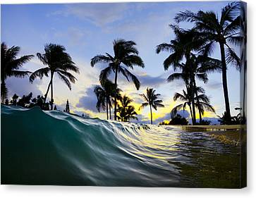 Palm Wave Canvas Print by Sean Davey