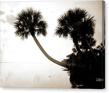 Palmettos Near St Canvas Print by Litz Collection