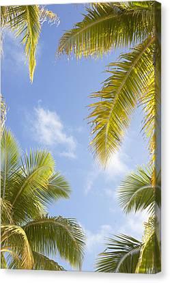 Palms And Sky Canvas Print by Brandon Tabiolo