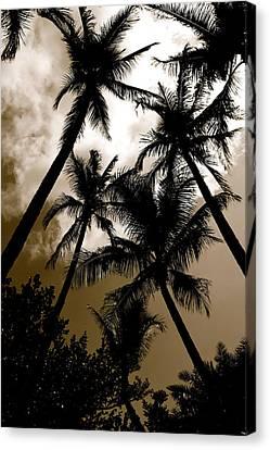 Canvas Print - Palms by AR Annahita