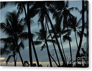 Palms At Dusk Canvas Print by Suzanne Luft