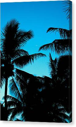 Canvas Print featuring the photograph Palms At Dusk With Sliver Of Moon by Lehua Pekelo-Stearns