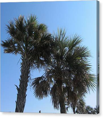 Palms At Fernandina 3 Canvas Print by Cathy Lindsey