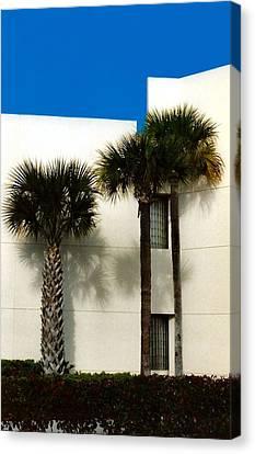 Palms Canvas Print by Bruce Lennon