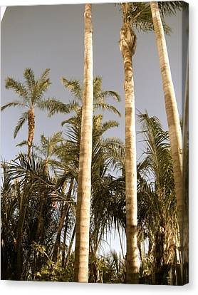 Palms Canvas Print by Brynn Ditsche
