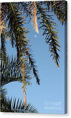 Palms In The Wind Canvas Print by AR Annahita