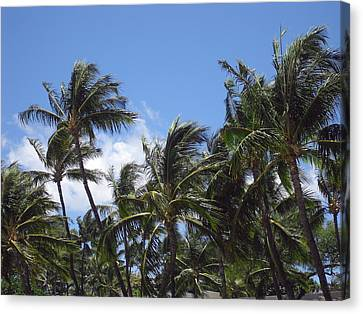 Palms In The Wind Canvas Print by Athala Carole Bruckner