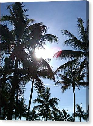 Canvas Print featuring the photograph Palms by J Anthony