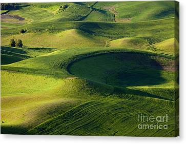 Palouse Curves Canvas Print by Mike  Dawson