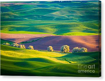 Palouse Field 3 Canvas Print by Inge Johnsson