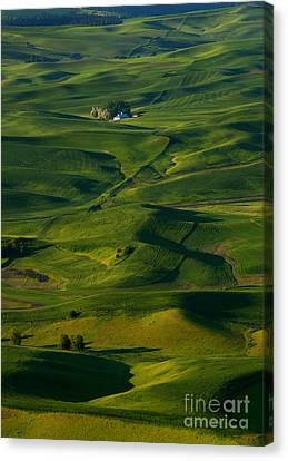 Palouse Green Canvas Print by Mike  Dawson