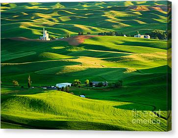 Palouse Green Sea Canvas Print by Inge Johnsson