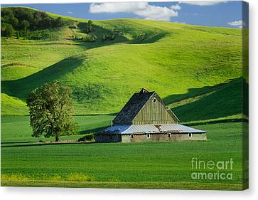 Palouse Grey Barn Canvas Print by Inge Johnsson