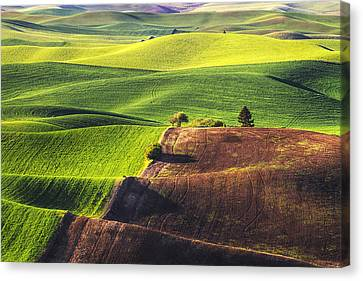 Palouse In Contrast Canvas Print by Mark Kiver