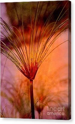 Pampas Grass - II Canvas Print by Susanne Van Hulst