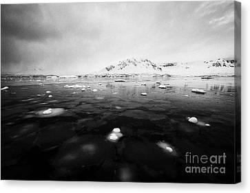 pancake sea ice forming in Fournier Bay on Anvers Island Antarctica Canvas Print by Joe Fox