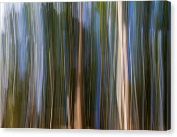 Panning Forest 3 Canvas Print