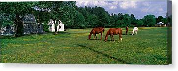 Panoramic View Of Horses Grazing Canvas Print by Panoramic Images