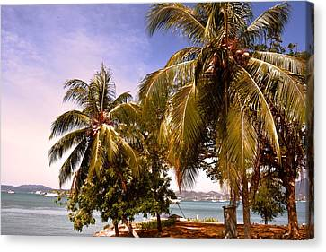 Panoramic View Of Nature With The Green Coconut Trees  Canvas Print by Siti  Syuhada