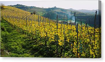 Winemaking Canvas Print - Panoramic View Of Vineyards, Peidmont by Panoramic Images