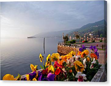 Pansies On Lake Maggiore Canvas Print