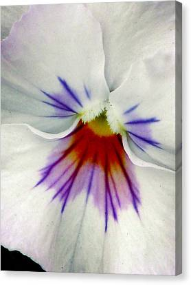 Pansy Flower 11 Canvas Print