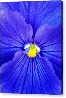 Pansy Flower 37 Canvas Print
