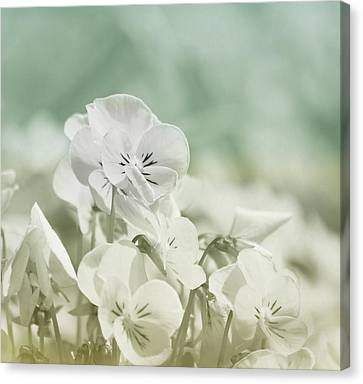 Pansy Flowers Canvas Print by Kim Hojnacki