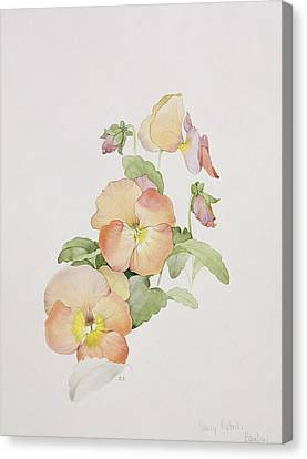 Pansy Hybrids Bambini Canvas Print by Sarah Creswell