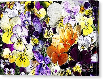 Pansy Posy Canvas Print by Erica Hanel