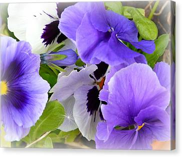 Pansy's Canvas Print