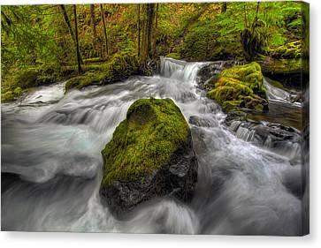 Panther Creek Falls Canvas Print by David Gn