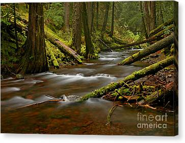 Canvas Print featuring the photograph Panther Creek Landscape by Nick  Boren