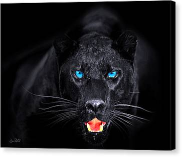 Panther Canvas Print by Jean raphael Fischer