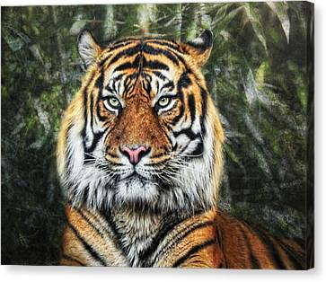 Panthera Tigris II Canvas Print by Joachim G Pinkawa