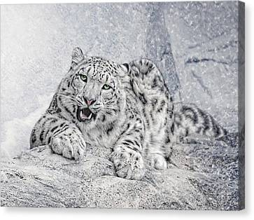 Panthera Uncia Canvas Print by Joachim G Pinkawa