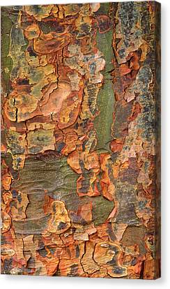Bark Paper Canvas Print - Paper-bark Maple Abstract by Nigel Downer