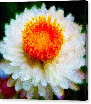 Paper Daisy Canvas Print by Chuck Mountain