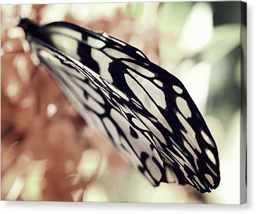 Paper Kite Butterfly Wings Canvas Print by Marianna Mills