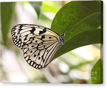 Canvas Print featuring the photograph Paper Kite On A Leaf by Ruth Jolly
