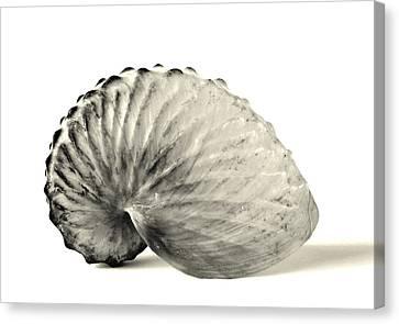 Paper Nautilus Shell Canvas Print by Meir Ezrachi