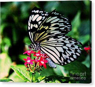 Paper White Butterfly Canvas Print