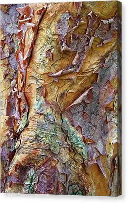 Bark Design Canvas Print - Paperbark Abstract by Jessica Jenney