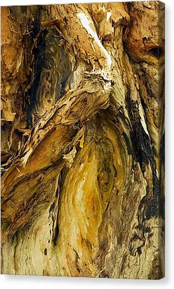 Bark Paper Canvas Print - Paperbark Tree Abstract by Stuart Litoff