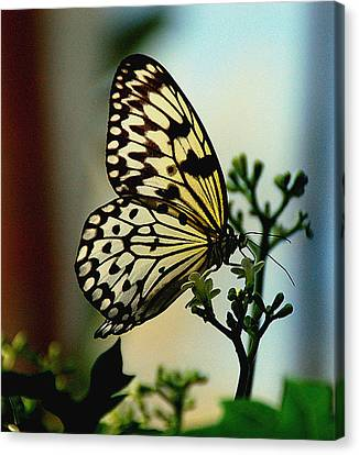 Paperkite Butterfly Canvas Print