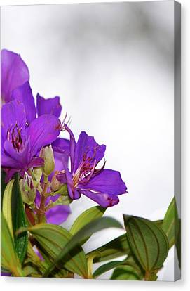 Paradise Found - Floral Photography By Sharon Cummings Canvas Print by Sharon Cummings