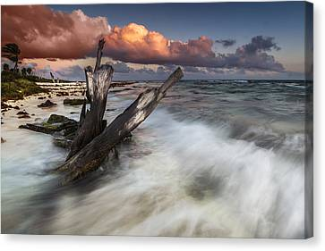 Paradise Lost Canvas Print by Mihai Andritoiu