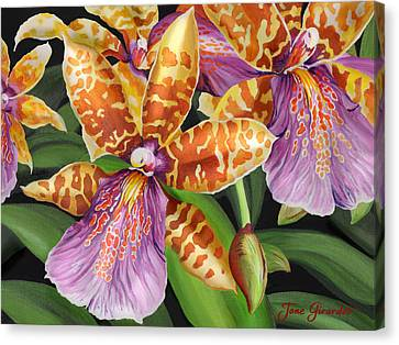 Paradise Orchid Canvas Print by Jane Girardot
