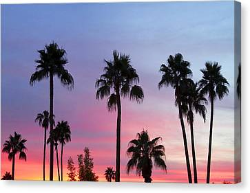 James Insogna Canvas Print - Paradise Palm Tree Sunset Sky by James BO  Insogna